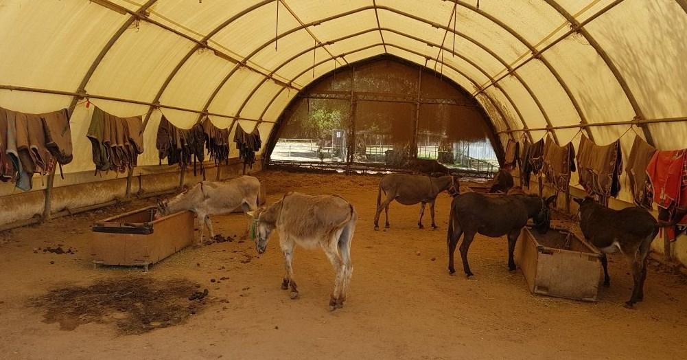 korfu ratowanie osłów